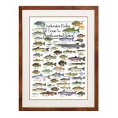 Posters :Freshwater Fishes of the Texas & South-central States (Poster)