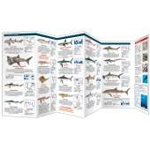 The World of Sharks (Folding Pocket Guide)
