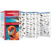 Caribbean Birds (Folding Pocket Guide)
