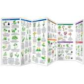 Edible Wild Plants (Folding Pocket Guide)