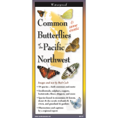 Insect Identification Guides :Common Butterflies of the Pacific Northwest