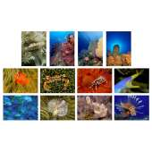 Postcards & Stationary :Sea and Aquarium Life Notecard Set C (12 pack)