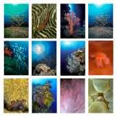 Postcards & Stationary :Sea and Aquarium Life Notecard Set A (12 pack)