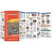 Beachcombing & Seashore Field Guides :Seashells: A Waterproof Folding Guide to Familiar North American Species