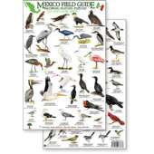 Bird Identification Guides :Mexico Field Guide: Baja, Sea of Cortez Sea & Shore Bird Guide (Laminated 2-Sided Card)