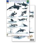 Books for Aquarium Gift Shops :North Pacific Killer Whales & Behaviors Field Guide (Laminated 2-Sided Card)