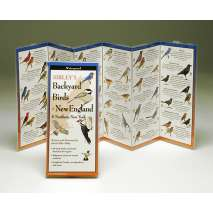 Birding, Sibley's Backyard Birds of New England (Folding Guides)