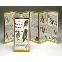 Bird Identification Guides, Sibley's Owls of North America (Folding Guides)