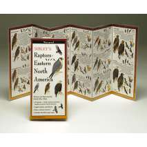 Birding :Sibley's Raptors of Eastern North America (Folding Guides)