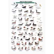 Birding, Northwest Coastal Water Birds  (Laminated 2-Sided Card)