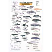 Fish & Sealife Identification Guides, Marine Mammals of North America  (Laminated 2-Sided Card)