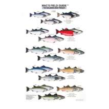 Fish & Sealife Identification Guides, Salmon and Trout of North America  (Laminated 2-Sided Card)