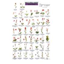 Pacific Northwest Field Guides, Pacific Northwest Wildflowers  (Laminated 2-Sided Card)