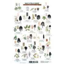 Pacific Northwest Field Guides, Northwest Trees  (Laminated 2-Sided Card)