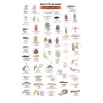 Insect Identification Guides, Northwest Garden Bugs  (Laminated 2-Sided Card)
