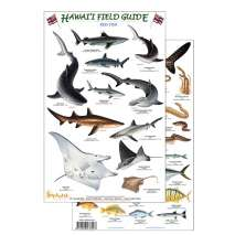 Aquarium Gift Shops, Hawaii Reef Fish Field Guide #2 (Laminated 2-Sided Card)