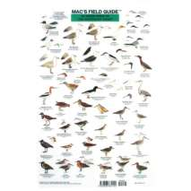 Bird Identification Guides, Northeast Coastal Water birds  (Laminated 2-Sided Card)