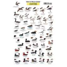 Birding, California Coastal Birds  (Laminated 2-Sided Card)