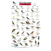 Pacific Northwest Field Guides, Northwest Park and Backyard Birds  (Laminated 2-Sided Card)