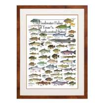 Posters, Freshwater Fishes of the Texas & South-central States (Poster)
