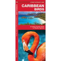 Bird Identification Guides, Caribbean Birds