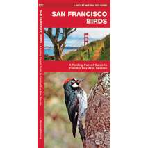 Bird Identification Guides, San Francisco Birds