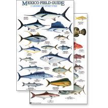 Fish & Sealife Identification Guides, Mexico: Caribbean Sport Fish (Laminated 2-Sided Card)