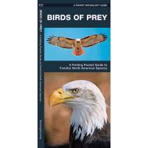 Bird Identification Guides, Birds of Prey