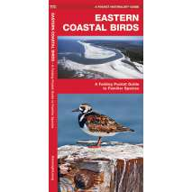 Birding, Eastern Coastal Birds