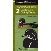 Bird Identification Guides, Cornell Lab of Ornithology Waterfowl ID: #2 Dabbling Ducks & Diving Ducks