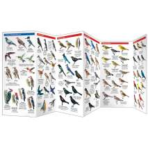 Bird Identification Guides :Bird Feeding Basics