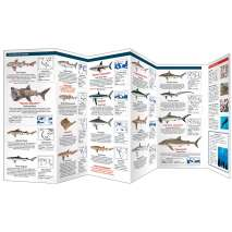 Fish & Sealife Identification Guides :The World of Sharks