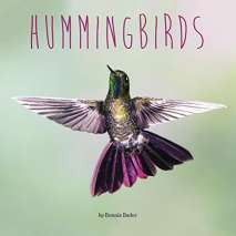Birds, Hummingbirds