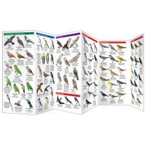 Bird Identification Guides :Caribbean Birds