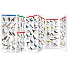 Alberta Birds (Folding Pocket Guide)