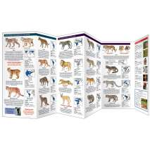 Reptile & Mammal Identification Guides :The World of Wild Cats