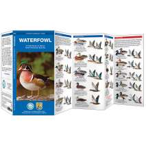 Bird Identification Guides :Waterfowl