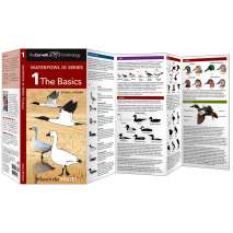 Bird Identification Guides :Cornell Lab of Ornithology Waterfowl ID: #1 The Basics