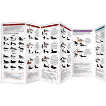 Bird Identification Guides :Cornell Lab of Ornithology Waterfowl ID: #2 Dabbling Ducks & Diving Ducks