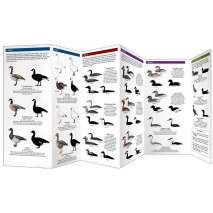 Bird Identification Guides :Cornell Lab of Ornithology Waterfowl ID: #3 Sea Ducks & Others