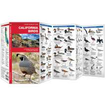 Bird Identification Guides :California Birds