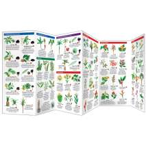 Tree, Plant & Flower Identification Guides :Hawaii Trees & Wildflowers