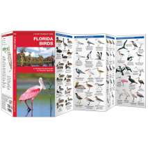 Bird Identification Guides :Florida Birds