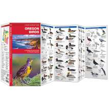 Bird Identification Guides :Oregon Birds