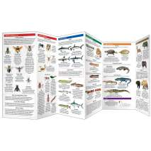 Reptile & Mammal Identification Guides :Dangerous Animals & Plants