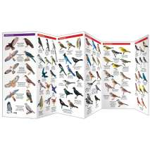 Bird Identification Guides :Backyard Birds of North America