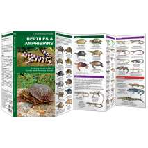 Reptile & Mammal Identification Guides :Reptiles & Amphibians