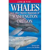 Fish & Sealife Identification Guides, Whales and Other Marine Mammals of Washington and Oregon