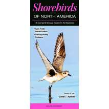 Bird Identification Guides, Shorebirds of North America