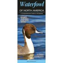 Bird Identification Guides :Waterfowl of North America